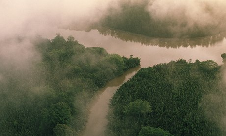 Mangroves Along Kinabatangan River